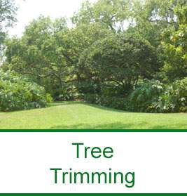 Jimmy S Tree Service Vero Beach Florida