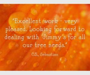 "'Excellent work - very pleased. Looking forward to dealing with Jimmy's for all our tree needs."" C.S. Sebastian"