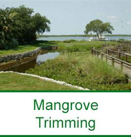Mangrove Trimming