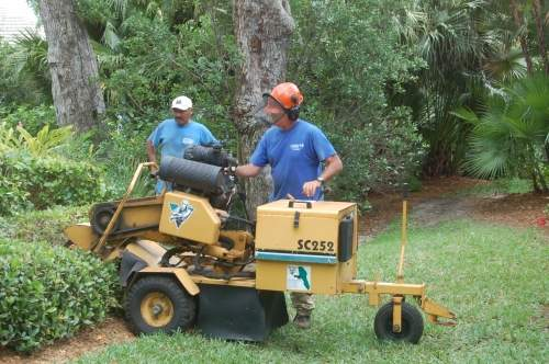 We have the best equipment for your stump grinding or stump removal needs.